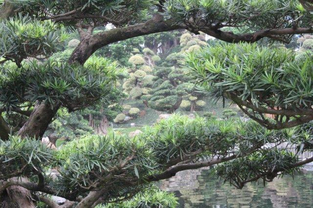 tree branches - ramas de árbol