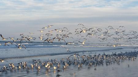 SeagullsBeach